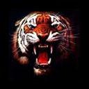 tijger-bewegende-animatie-0059