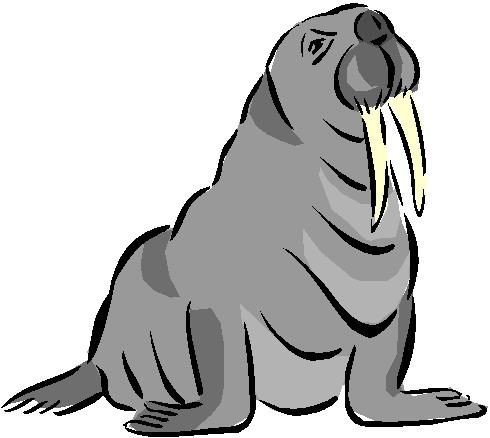 walrus-bewegende-animatie-0010