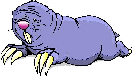 walrus-bewegende-animatie-0015