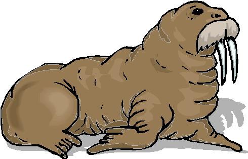 walrus-bewegende-animatie-0016