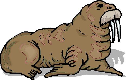 walrus-bewegende-animatie-0024