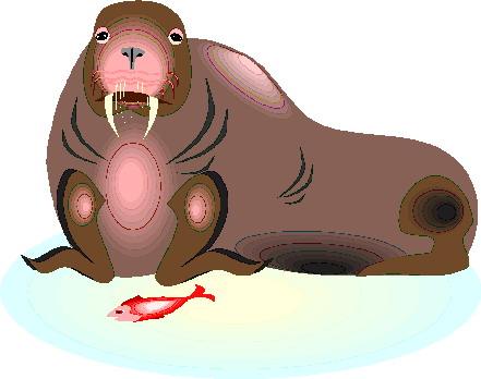 walrus-bewegende-animatie-0025
