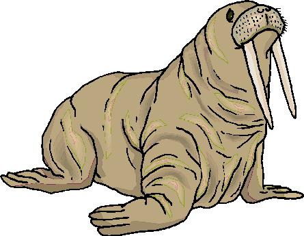 walrus-bewegende-animatie-0032