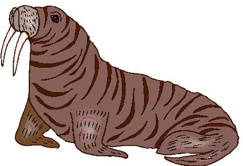 walrus-bewegende-animatie-0035
