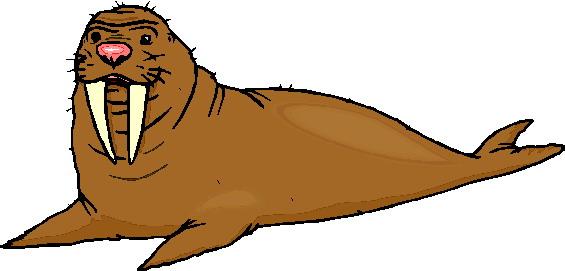 walrus-bewegende-animatie-0036