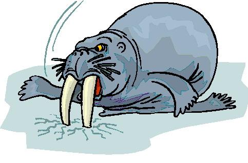 walrus-bewegende-animatie-0038