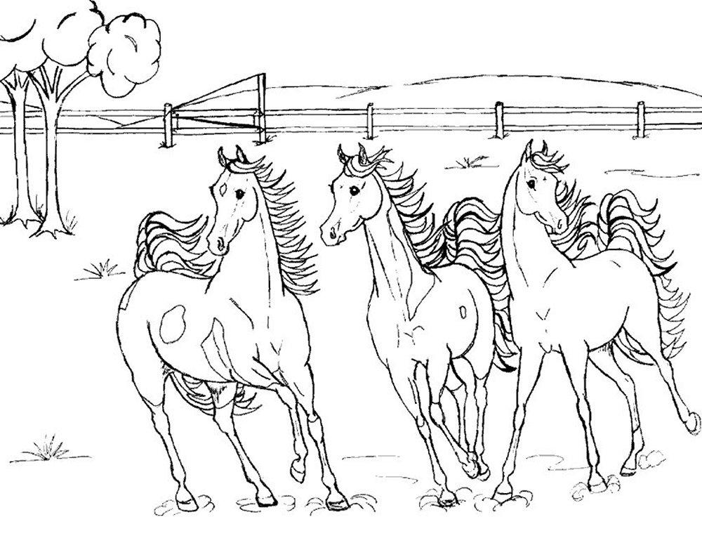 Kleurplaten Paarden En Konijnen.Kleurplaten Paarden Bewegende Afbeeldingen Gifs Animaties