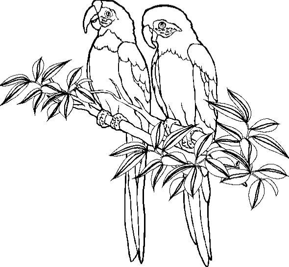 Gratis Kleurplaten Dieren Kleurplaten Papegaaien Amp Parkieten Bewegende Afbeeldingen