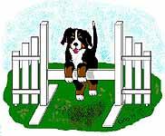 berner-sennen-hond-bewegende-animatie-0109