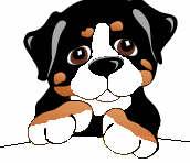 berner-sennen-hond-bewegende-animatie-0173