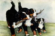 berner-sennen-hond-bewegende-animatie-0261